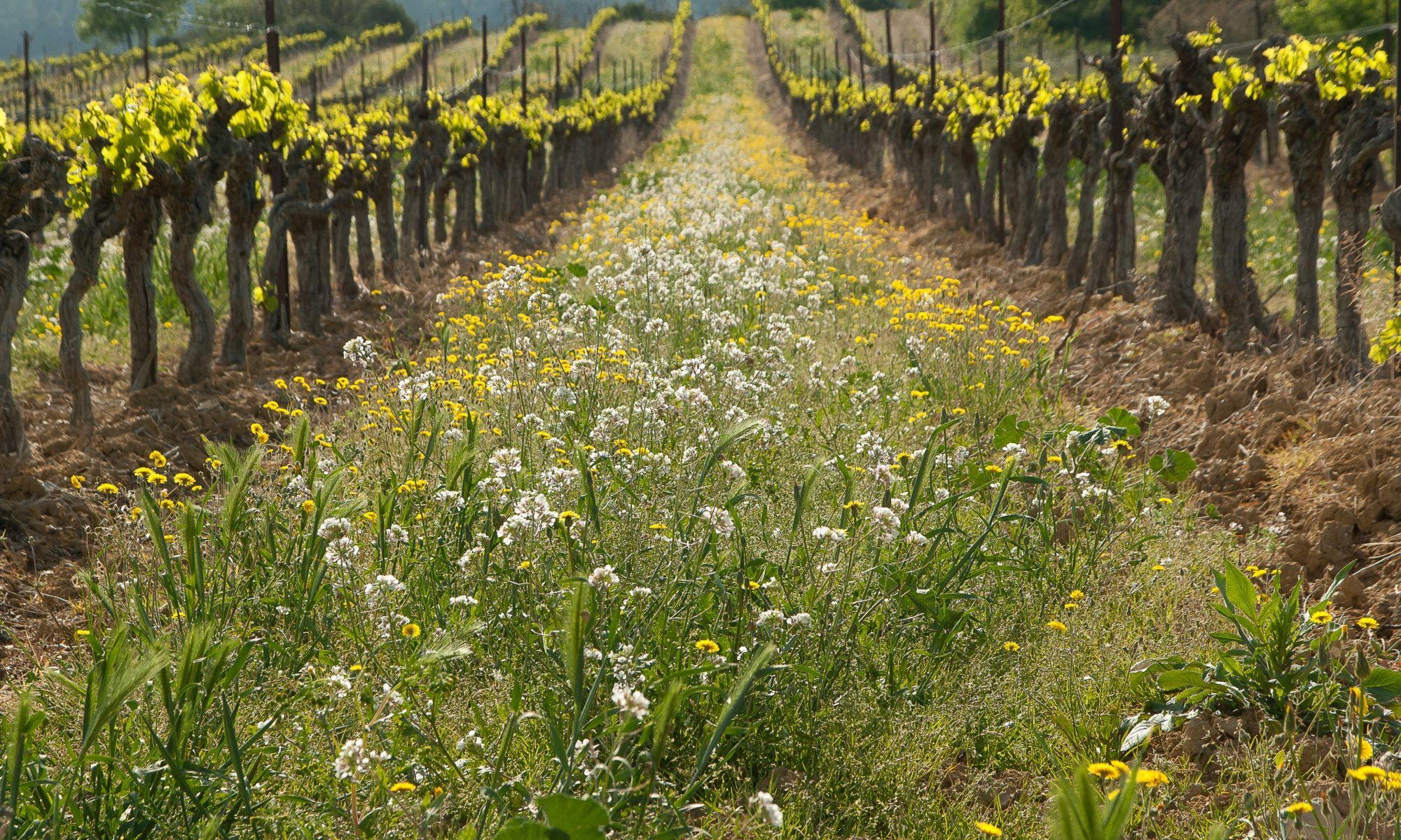 Viticulture biodynamique